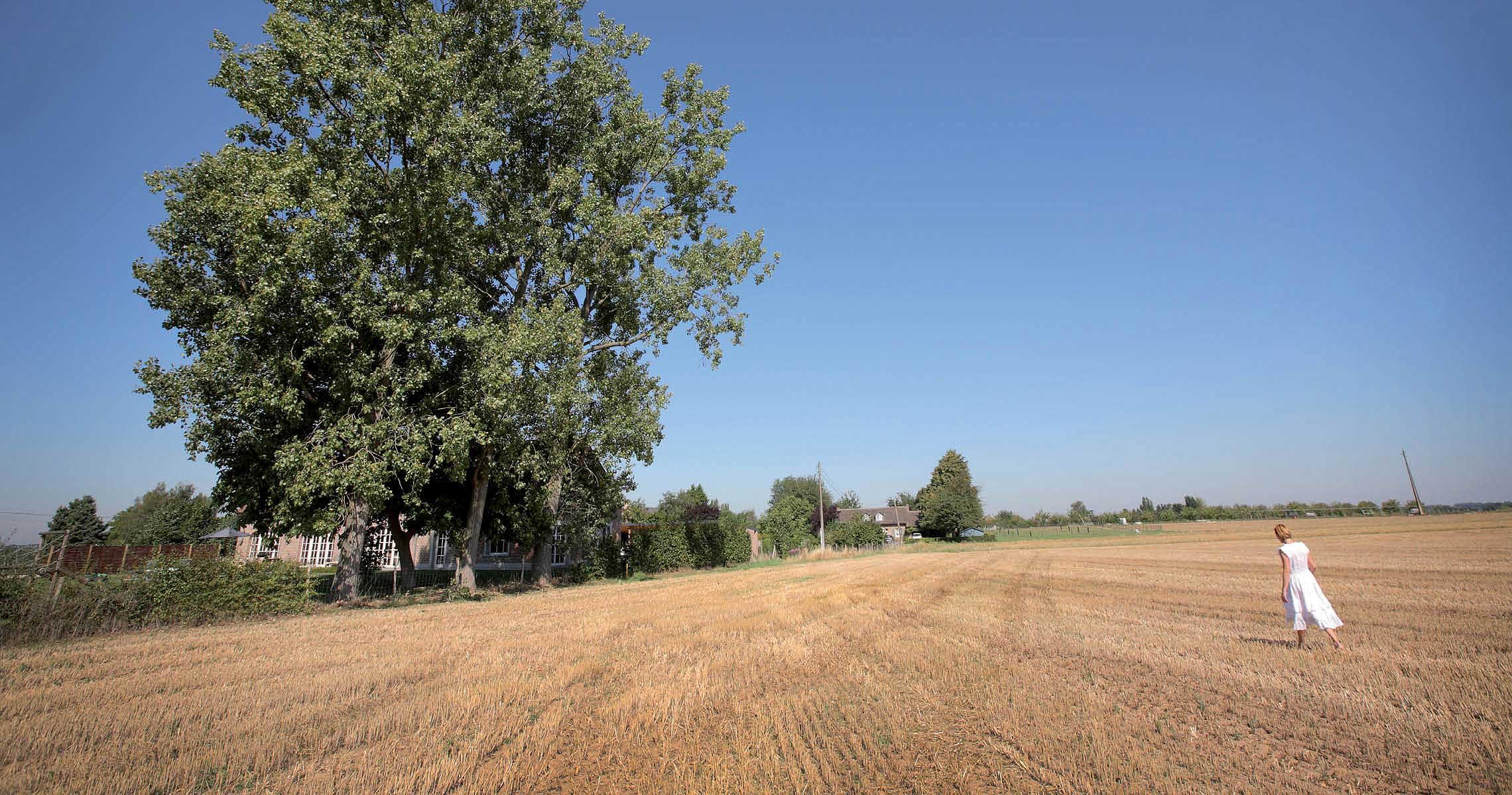 Vast Hageland field large trees wide sky